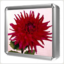 "AlumiTec Elite™ 13"" x 13"" Light Box w/ White Panel"