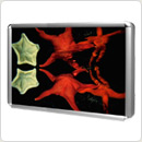 "AlumiTec Elite™ 24"" x 36"" Light Box w/ White Panel"